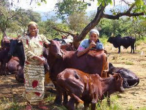 fulani girls and cows