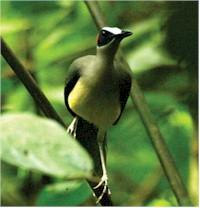 Special Birdwatching Tour Packages